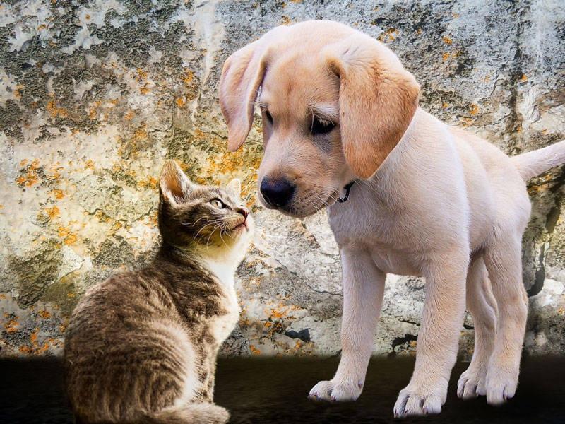 Tierschutzkalender 2019
