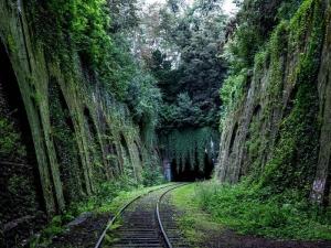 Petition - Keine Touristenbahn im Regenwald der Maya!