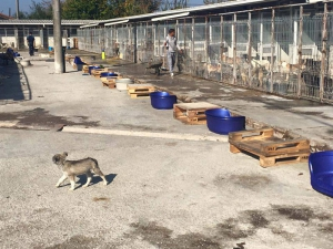 SOS für die Hunde aus dem Odai, Shelter in Bukarest
