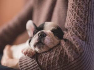Liebe Tierfreunde, Adoptanten und Pflegestellen,
